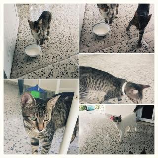 Gatos para adopcion