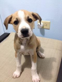 Lindos puppies para adopción GRATIS