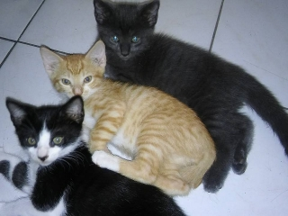 Gatos Machos  se regalan