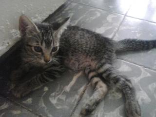 se regala gatita de dos meses. a persona que ame los gatos. si le interesa llame al 7877445251