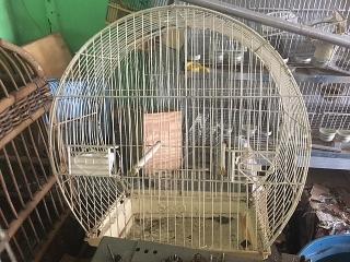 Jaula de aves