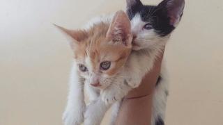 Regalo 2 gatitos hembra y macho
