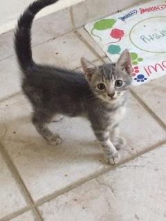 Gatitos machos 2 meses buscan hogar