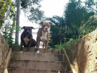 Se regallan bulldogs