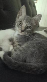 Gatito para adopcion!!!