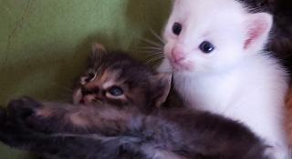 Gatitos en busca de hogar y cariño