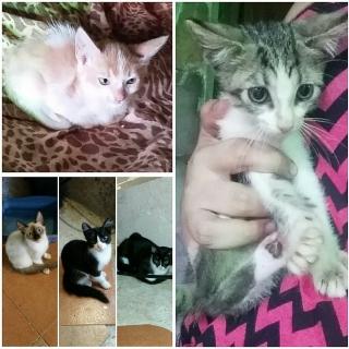Gatitos para adopción !!!urgente