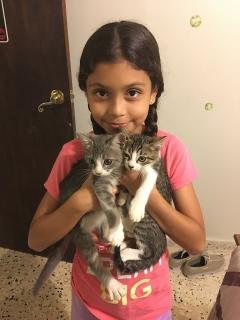 Adopte un hermoso gatito