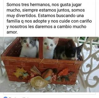 Adopte gatitos