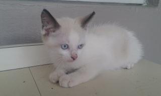 Gato para adopción