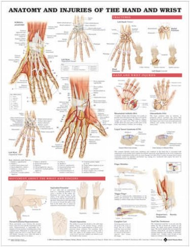 Anatomy and Injuries of Hand and Wrist. 20X26 Styrene Plastic Chart. Cover Image