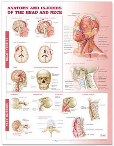 Anatomy and Injuries of the Head and Neck. 20X26 Paper Chart. Cover Image