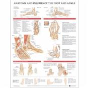 Anatomy and Injuries of the Foot and Ankle. 20X26 Styrene Plastic Chart. Cover Image