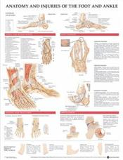 Anatomy and Injuries of the Foot and Ankle. 20X26 Laminated Chart. Cover Image