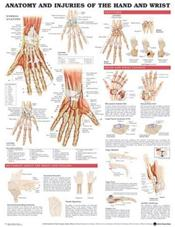 Anatomy and Injuries of the Hand and Wrist. 20X26 Laminated Chart. Cover Image