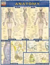 Anatomy Laminate Reference Chart