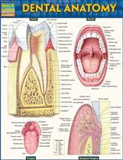 Dental Anatomy Laminated Reference Chart