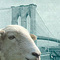 Brooklynsheep