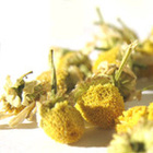 Camomile from Leaf
