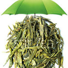 Dragonwell Longjing from Stir Tea
