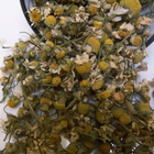 Egyptian Chamomile from Unknown