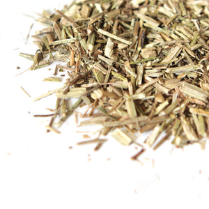 French Vervain from Sanctuary T