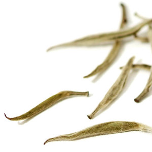 White Okayti Estate Darjeeling Silver Tips from Jing Tea