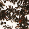 Darjeeling Finest Blend from Murchie's Tea & Coffee