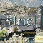 Serenitea: Ariel from Adagio Teas