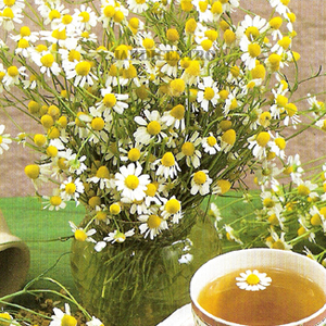 Organic Chamomile (Camomila 100% da agricoltura biologica) from L&#x27;Angelica Istituto Erboristico