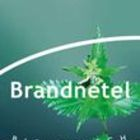 Brandnetel (String Nettle) from Piramide thee
