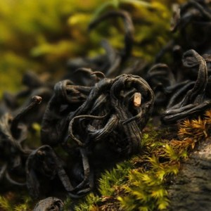 Laoshan Black from Verdant Tea