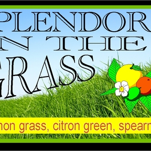 splendor in the grass from Custom-Adagio Teas