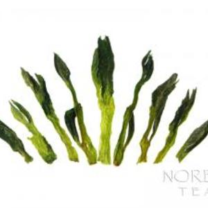 Tai Ping Hou Kui - 2011 Spring Anhui Green Tea from Norbu Tea