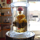 Blooming Christmas Tree from New Mexico Tea Company