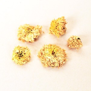 Chrysanthemum Flowers from Canton Tea Co