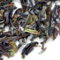 Darjeeling SFTGFOP 1 Lingia First Flush from TeaGschwendner