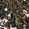 Organic Genmaicha from Fusion Teas