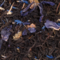 Fort George Blend from Victoria&#x27;s Teas and Coffees