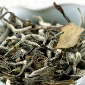 Xin Gong Yi (New Craft) from Red Blossom Tea Company