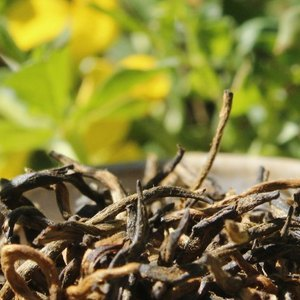 Wild-Picked Yunnan Jin Jun Mei from Verdant Tea