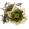 Organic Huangshan Mao Feng (Yellow Mountain Fur Peak) from The Tea Forest