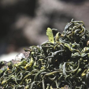 Laoshan White from Verdant Tea