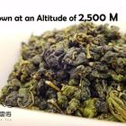 Taiwan Da Yu Ling Oolong Tea from Nuvola Tea