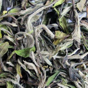 Fu Ding Bai Mu Dan from jing tea shop