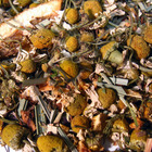 Chamomile Citrus from Fusion Teas