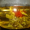 3 Flower Burst Tea from Cuppa&#x27;T Specialty Teas