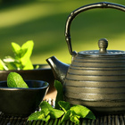Tea cultivation from Indian Tea Industries