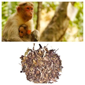 White Monkey Picked from Tea Gallerie