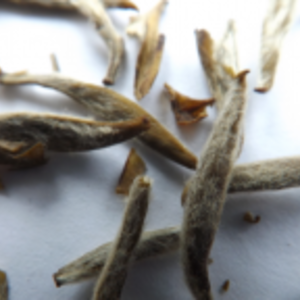 Jasmine Silver Needle (King Grade) from tea-adventure